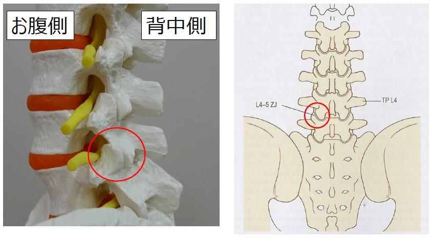 お悩み相談~腰痛の原因編part1~
