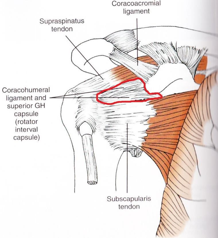 肩の痛みで悩んでいる方Part5 ~肩関節の安静位~