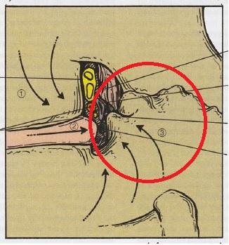 ~脊髄神経から診る腰痛~ Part3 椎間関節