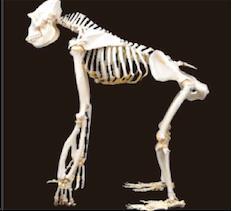 股関節について Part5 ~股関節の適合性②~